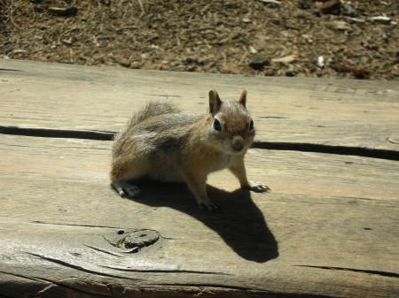 Brice Canyon scoiattolo 01