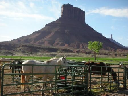 Cavalli A Sorrel Ranch