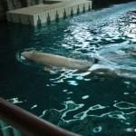 Chicago Aquarium 01